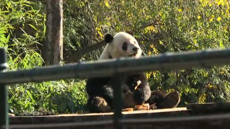 What? Even the panda cams? Government shutdown would hit National Zoo