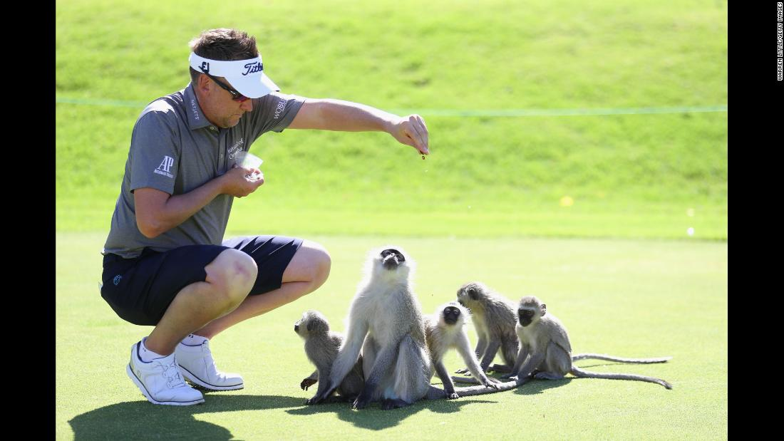 Golfer Ian Poulter feeds monkeys on the driving range before playing in the Nedbank Golf Challenge, a tournament in Sun City, South Africa, on Tuesday, November 7.