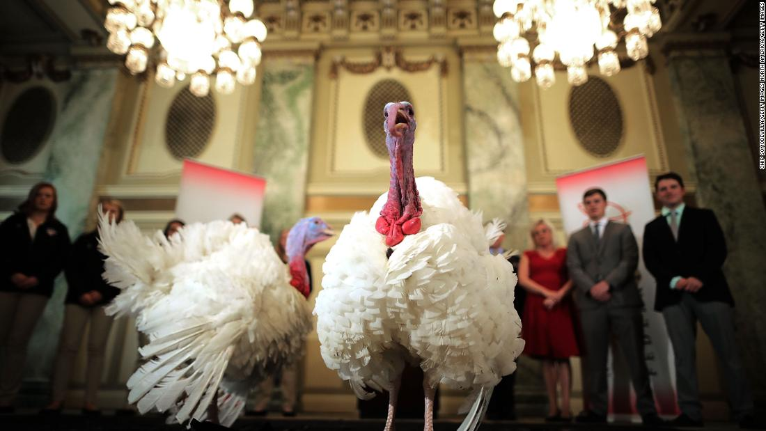 Here's where turkeys pardoned by the President will find a permanent place to nest