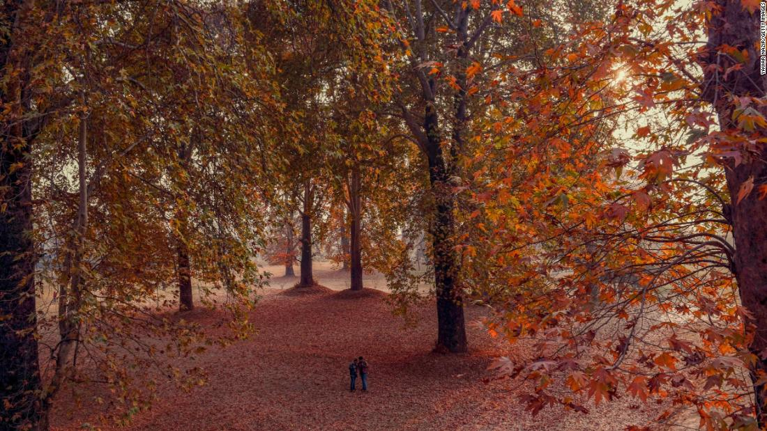 <strong>Srinagar, Kashmir Valley:</strong> Rich November colors in the Nishat Bagh Mughal garden in Srinagar. The trees are chinar, or oriental plane, an indigenous variety of maple. <br />