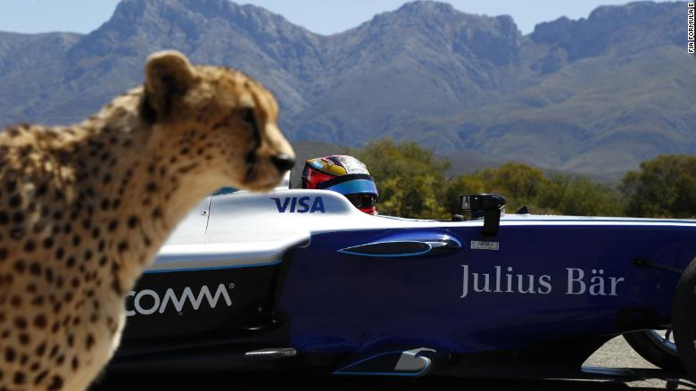 Cheetah vs. Techeetah: Cat vs. Formula E car