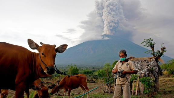 A villager takes his cows to a field with Mount Agung volcano seen in the background near Karangasem, Bali, Indonesia, on Tuesday, Novenber 28. The eruption has forced tens of thousands of people to evacuate their homes.
