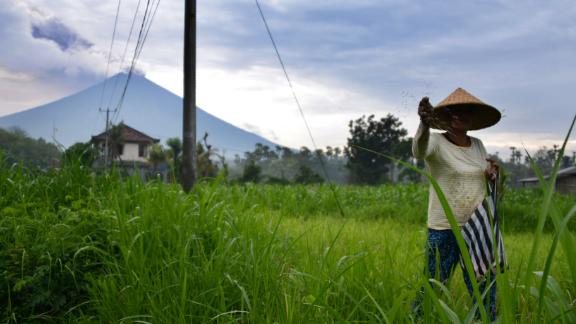 A farmer tends to her crops, as the Mount Agung volcano is seen in the background, on November 29.