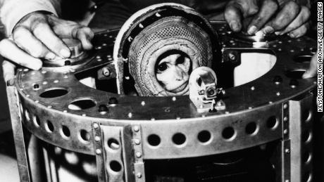 10th December 1959:  Rhesus monkey Sam on board the USS Borie after he travelled 55 miles high and 200 miles out into the Atlantic in a biopack.  (Photo by Keystone/Getty Images)