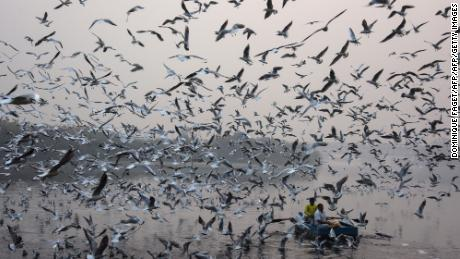 Indian men feed seagulls on the Yamuna River in New Delhi on November 15, 2017.   / AFP PHOTO / DOMINIQUE FAGET        (Photo credit should read DOMINIQUE FAGET/AFP/Getty Images)