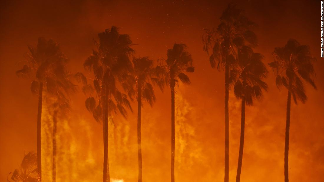 Palm trees burn in Ventura on December 5.
