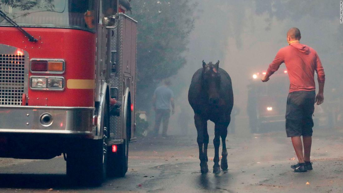 A man tries to catch a horse that got loose in the Lake View Terrace area of Los Angeles on December 5.