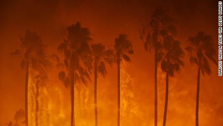 Smoke blows out of the burning palm trees as brush fire threatens homes in Ventura, California.