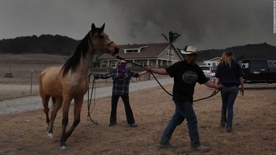 Horses Are Evacuated From The Laughing Dog Ranch As Smoke From The Thomas  Fire Descends On