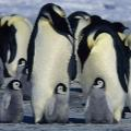 05 penguins long history