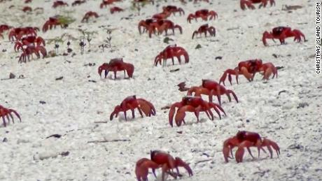 Millions of crabs take over Google Street View