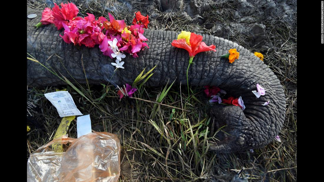 Flowers are placed on the carcass of an elephant that forest officials said was electrocuted in a paddy field in Nagaon, India, on Tuesday, December 12.
