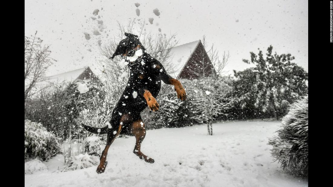 A dog catches a snowball in Godewaersvelde, France, on Monday, December 11.