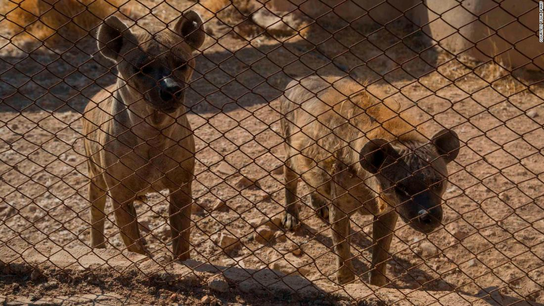The animals rescued from the park included two hyenas.