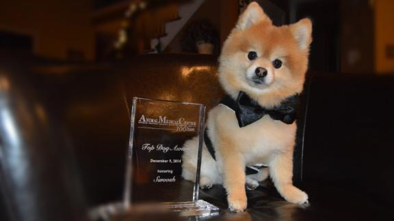 Therapy dog Swoosh with his 2014 Animal Medical Center Top Dog award.