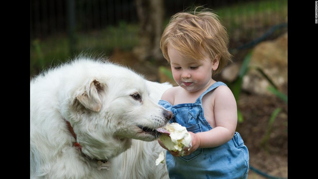Fourteen-month-old Hudson Walsh shares an ice cream cone with his dog Sammy in Adelaide, South Australia, on Monday, December 18.