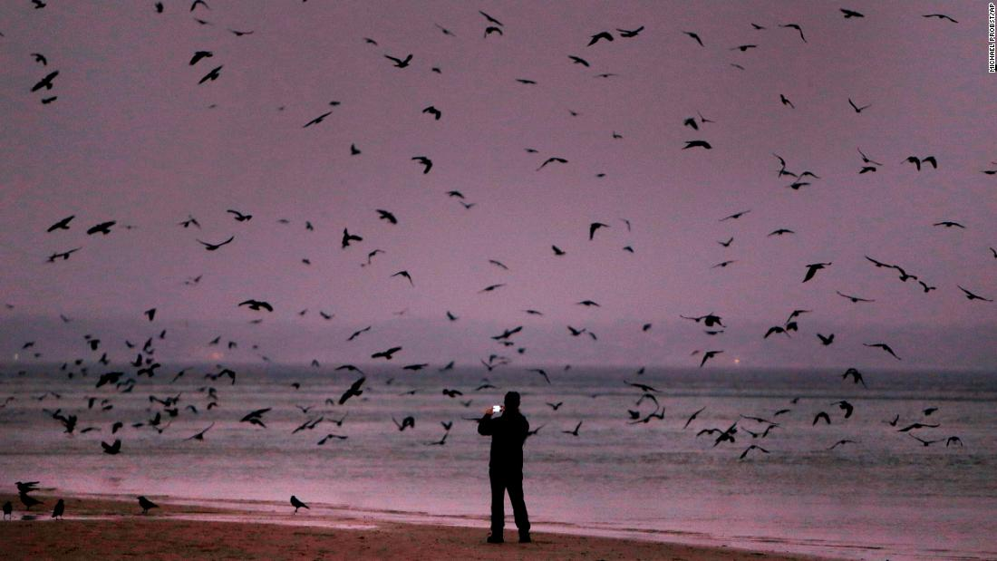 <strong>Ostholstein, Germany:</strong> A man photographs crows on the edge of the Baltic Sea at northern Germany's Timmendorfer Strand.