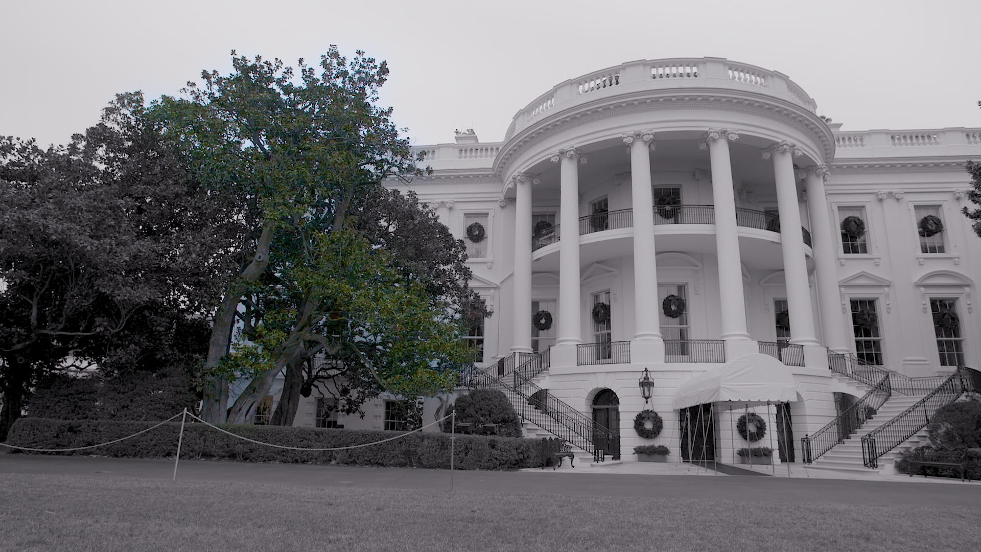 Historic White House Tree Is Coming Down Cnn Video