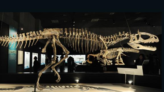 The very first dinosaur remains were discovered in the Antarctic region in 1986, followed four years later by the discovery of the first carnivorous dinosaur in Antarctica -- the Cryolophosaurus Ellioti. Measuring 21.3 feet and weighing 1,025 pounds, the Cryolophosaurus Ellioti (pictured) was one of the largest theropods of its time.