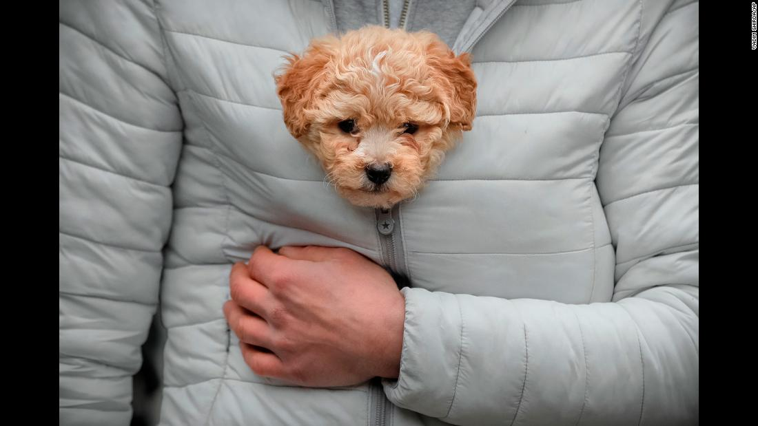 A man keeps a puppy warm in his jacket while watching a parade in Comanesti, Romania, on Saturday, December 30.