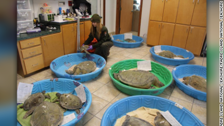 Staffers from the National Park Services Padre Island National Seashore brought sea turtles indoors Thursday to protect them from the cold temperatures currently impacting the Corpus Christi area, according to a post on their verified Facebook page.