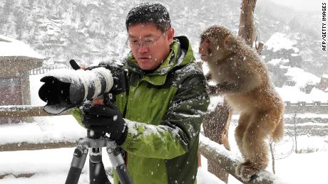 This picture taken on January 6, 2018 shows a macaque monkey looking at a man's camera during snowfall at Wulongkou Nature Reserve in Jiyuan in China's central Henan province. / AFP PHOTO / - / China OUT        (Photo credit should read -/AFP/Getty Images)