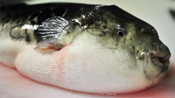 Deadly blowfish (or Fugu) is a delicacy in Japan.