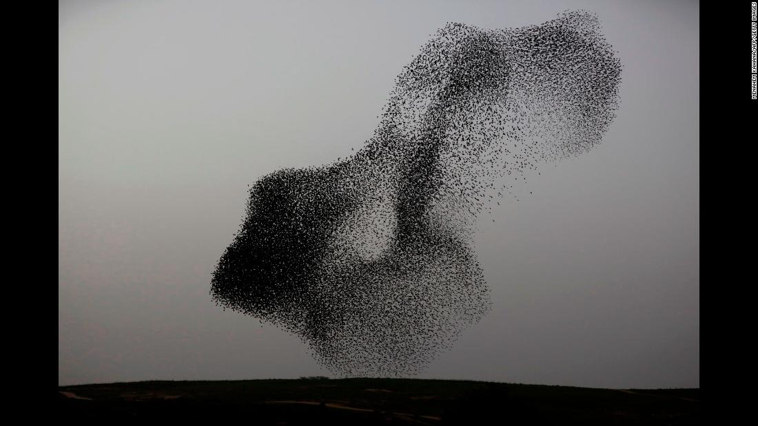 "A murmuration of starlings is seen in the southern Israeli city of Rahat, in the Negev desert region, on Monday, January 22. <a href=""http://www.cnn.com/2018/01/19/world/gallery/week-in-photos-0119/index.html"" target=""_blank"">See last week in 24 photos</a>"
