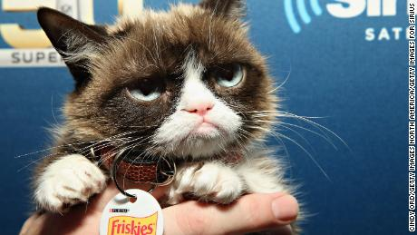 SAN FRANCISCO, CA - FEBRUARY 04:  Grumpy Cat visits the SiriusXM set at Super Bowl 50 Radio Row at the Moscone Center on February 4, 2016 in San Francisco, California.  (Photo by Cindy Ord/Getty Images for SiriusXM)