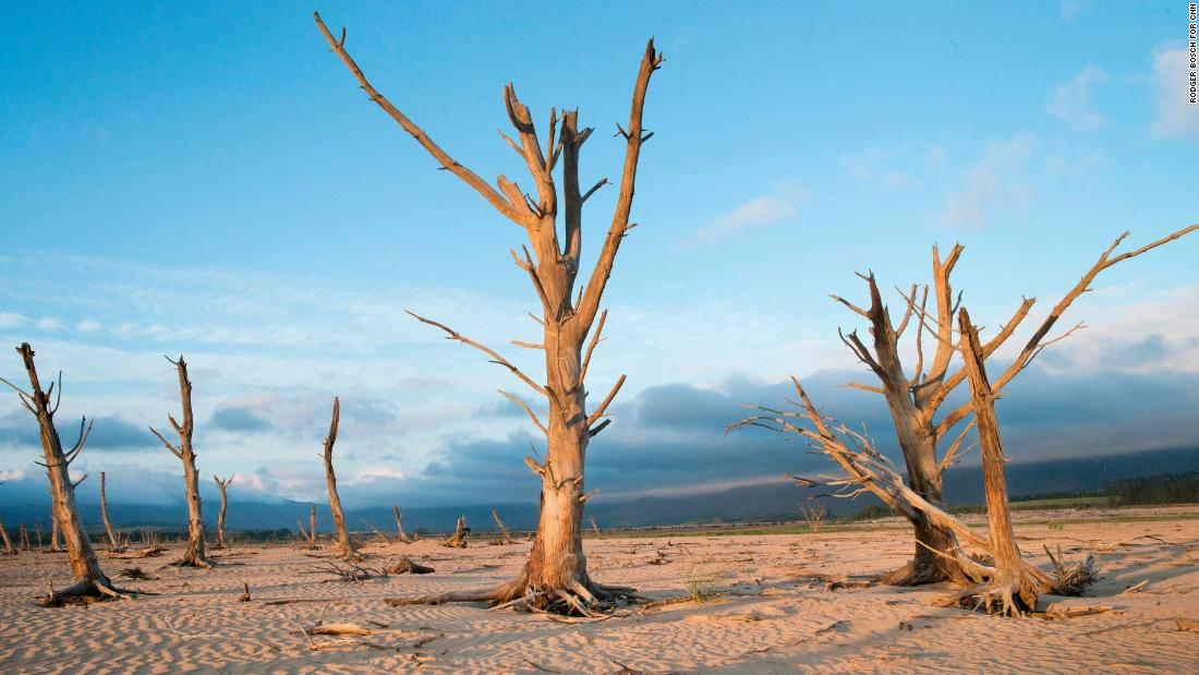 On January 26, dead trees are seen at a dam near Grabouw, South Africa, which is about 90 kilometers (55 miles) from the center of Cape Town.