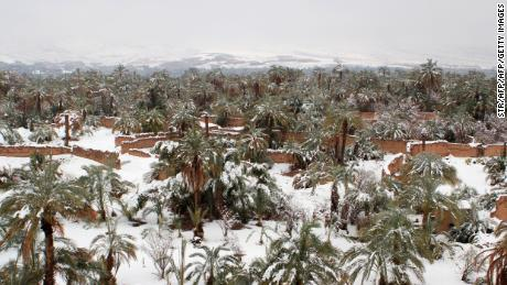 A picture taken on January 29, 2018 shows a palm grove covered in snow in the southern Moroccan town of Zagora. Snow on the sand dunes: the cities of Zagora and Ouarzazate, at the doors of the Moroccan desert, were covered with snow, an unusual phenomenon due to a cold snap from northern Europe. / AFP PHOTO / STR        (Photo credit should read STR/AFP/Getty Images)