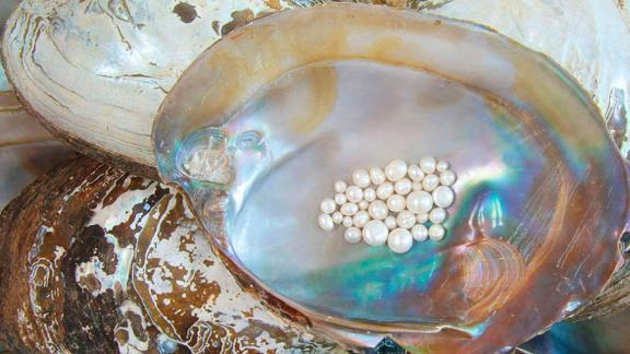 Pearls are valuable gemstones that are rarely found in wild oysters.