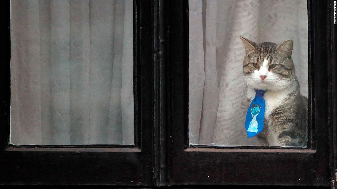 "A cat, believed to be owned by WikiLeaks founder Julian Assange, wears a tie as it looks out of a window at the Ecuadorian Embassy in London on Friday, January 26. Assange <a href=""https://www.cnn.com/2018/01/11/europe/wikileaks-julian-assange-given-ecuadorian-citizenship/index.html"" target=""_blank"">has been holed up at the embassy</a> since 2012.<br />"