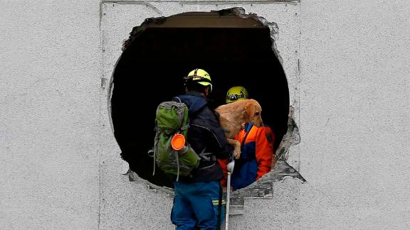 Emergency personnel rescue a pet dog from a damaged building in Hualien on February 7.