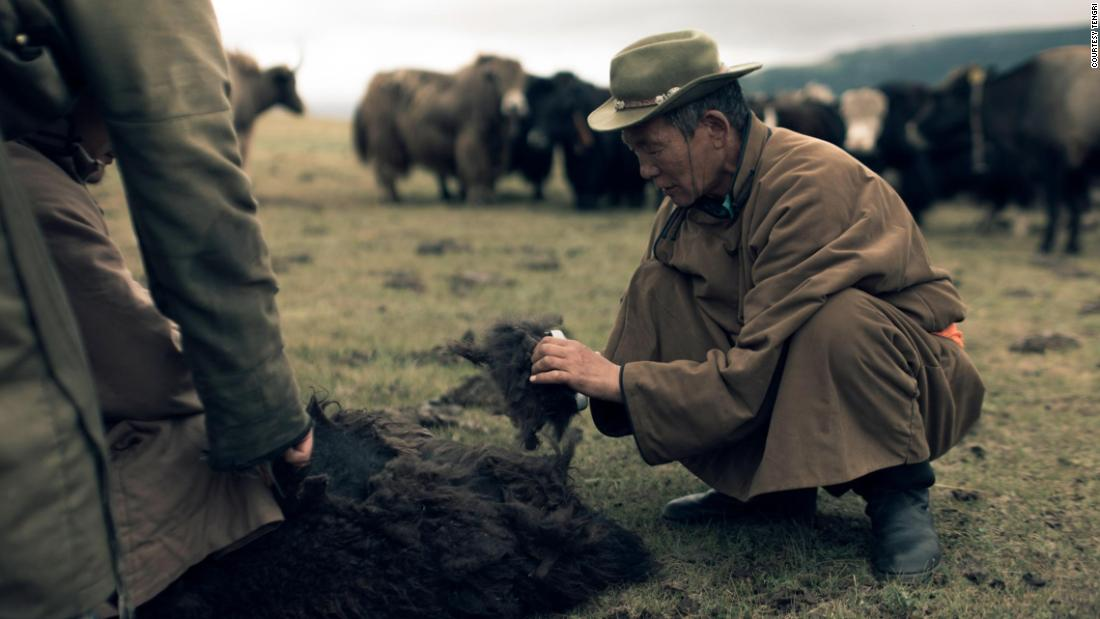 Mongolian herders harvest the fine undercoats of the yaks in the spring by combing the animals.