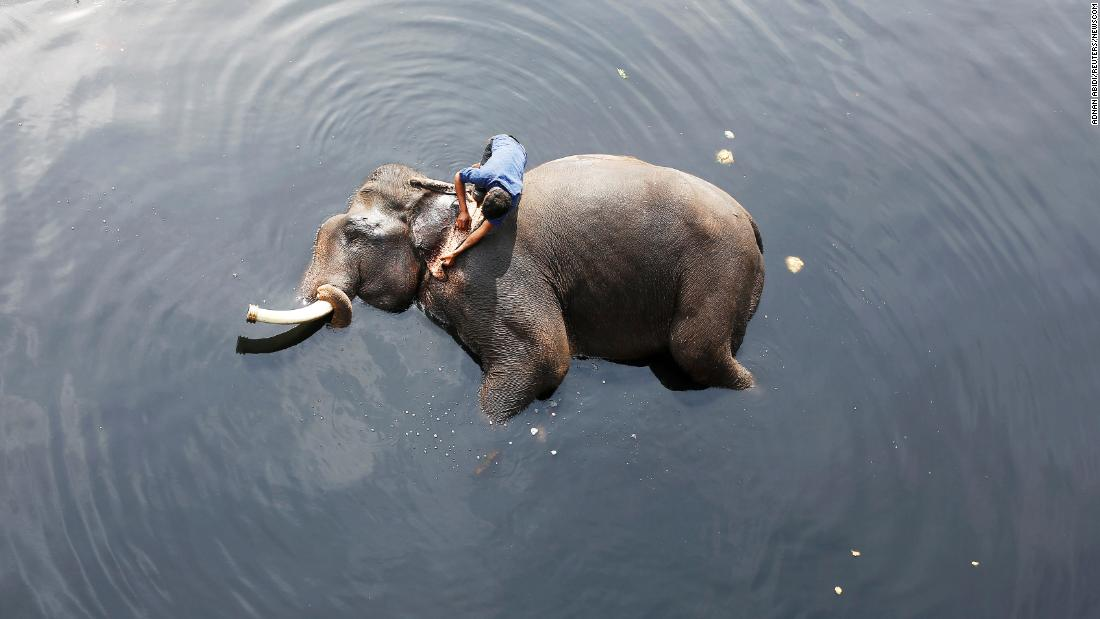 A mahout bathes his elephant in the Yamuna River in New Delhi on Tuesday, February 6.