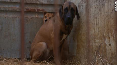 This case shows why dog breeders need to be regulated