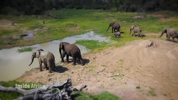 Inside Africa Saving elephants by crossing borders B_00000000.jpg
