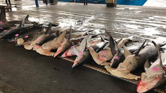 Harmmerhead sharks at a port in Taiwan