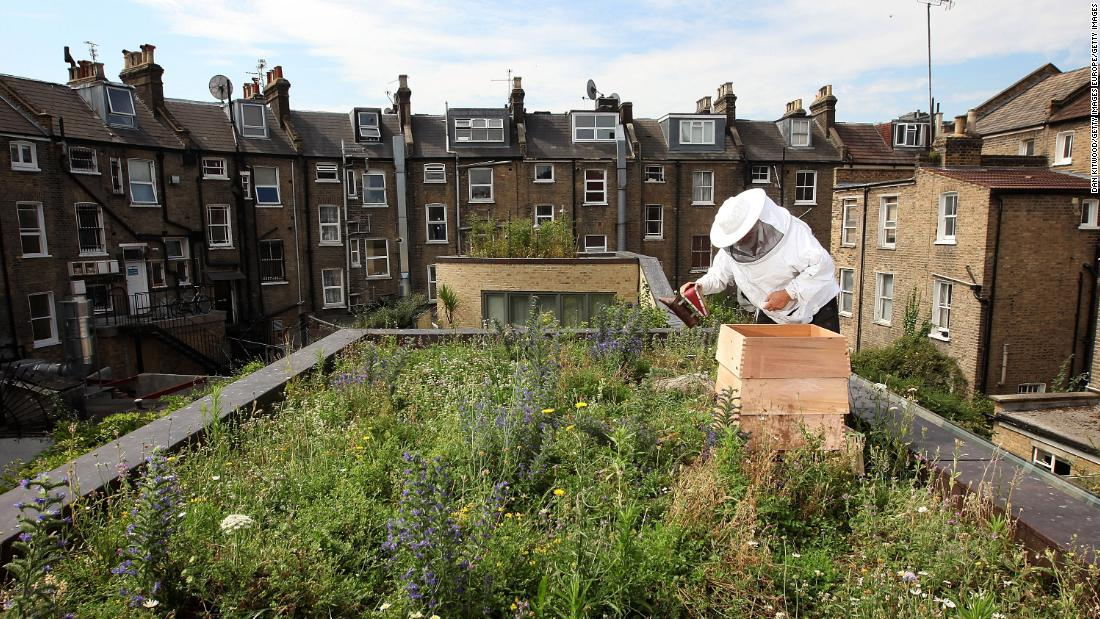 As more cities are trying to incorporate greenery into urban living, green roofs have been sprouting up in different places, bringing with them benefits such as reducing flood risk, cooling buildings and providing places for nature to thrive.<br /><br />Beehives in England can be found on top of iconic buildings such as St Paul's Cathedral and luxury department store Fortnum & Mason.