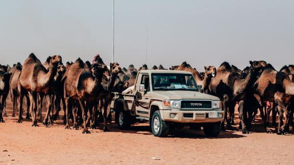 Desert excursion: King Abdulaziz Camel Festival is hosted in Al-Dahna, an empty swathe of desert about 90 minutes