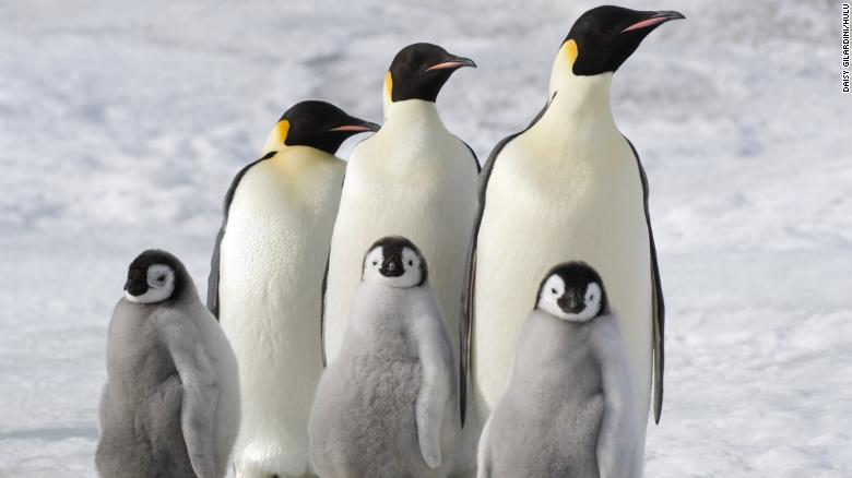 'March of the Penguins' (Photo by: Daisy Gilardini)