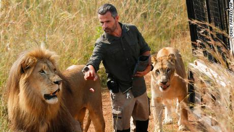 "Kevin Richardson, known as the ""lion whisperer"", takes two of his lions for a walk in the Dinokeng Game Reserve, near Pretoria, South Africa on March 15, 2017 (AP Photo/Denis Farrell, File)"