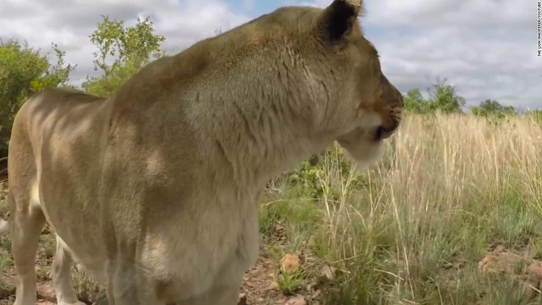 Lion mauls woman to death at popular South African wildlife sanctuary