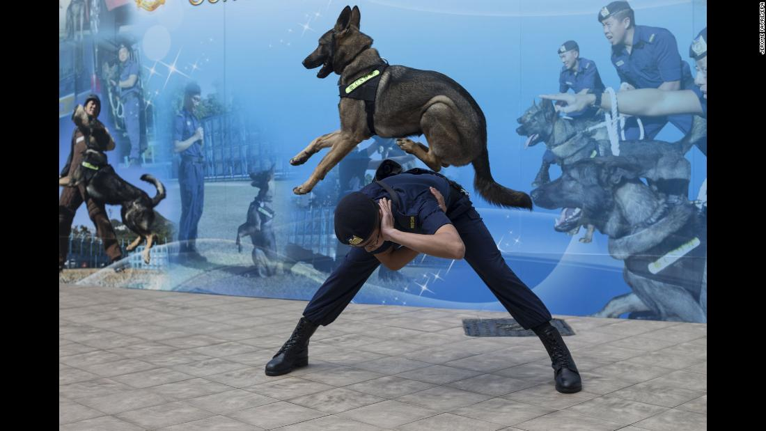 A police dog jumps over a Hong Kong corrections officer as they conduct a training demonstration on Tuesday, February 27.