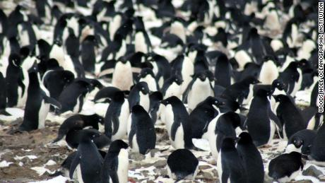 Scientists find a previously unknown mega-colony of penguins on Antarctic islands