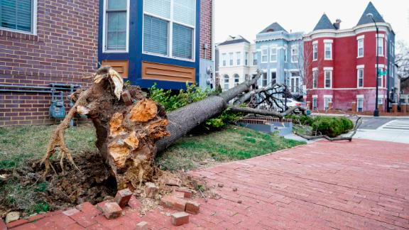 Winds bring down a tree in Washington on March 2.