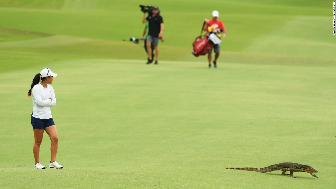 A monitor lizard shares a fairway with golfer Danielle Kang during the second round of the HSBC Women's World Championship, which was played in Singapore on Friday, March 2.