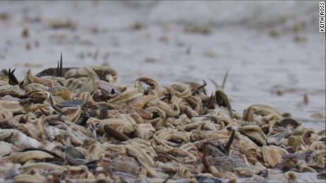 Crabs, mussels and lobsters were among some of the sea creatures that washed up.