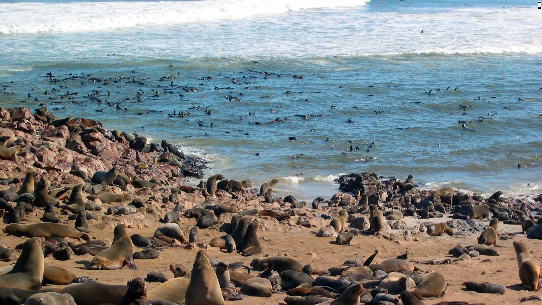 """The waters off the coast of Namibia are an important area for a high diversity of resident and migratory species, such as sharks, whales, dolphins and seals,"" Thompson tells CNN."